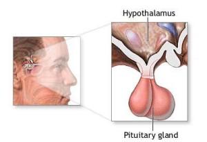 PituitaryGland.196230413_std