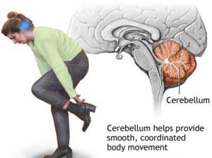 cerebellum.111133337_std