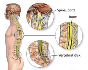 spinal_cord_injuries.111133922_std
